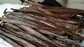 Vanilla stick 1 photo